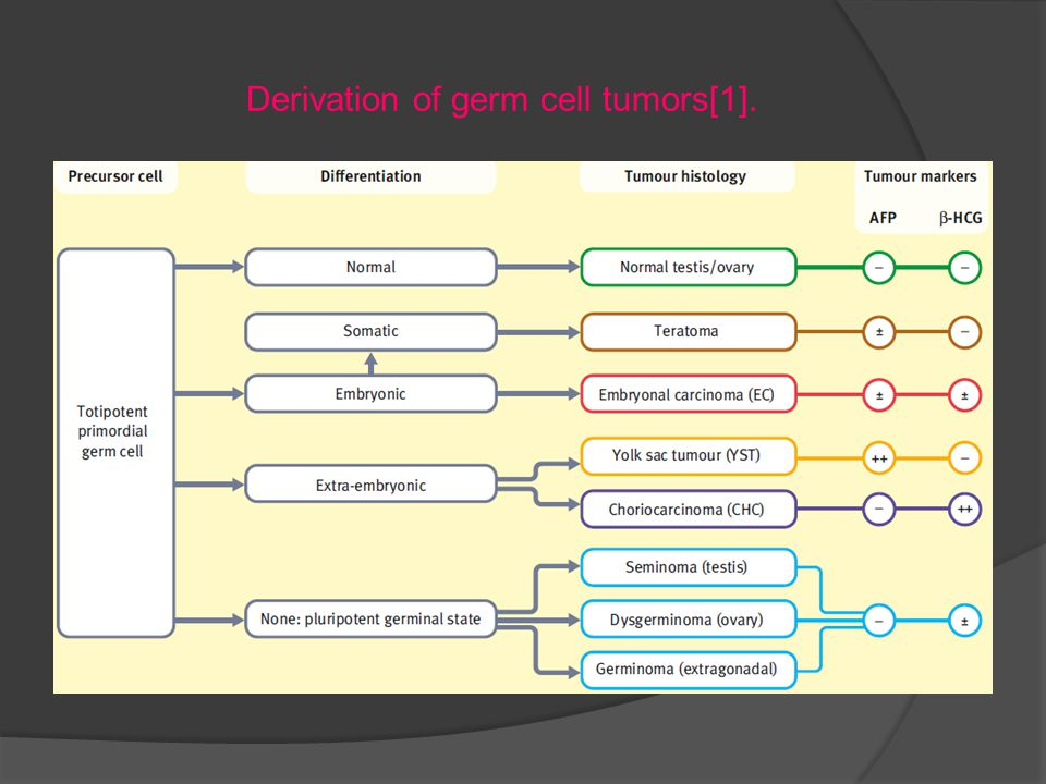 Derivation of germ cell tumors[1].